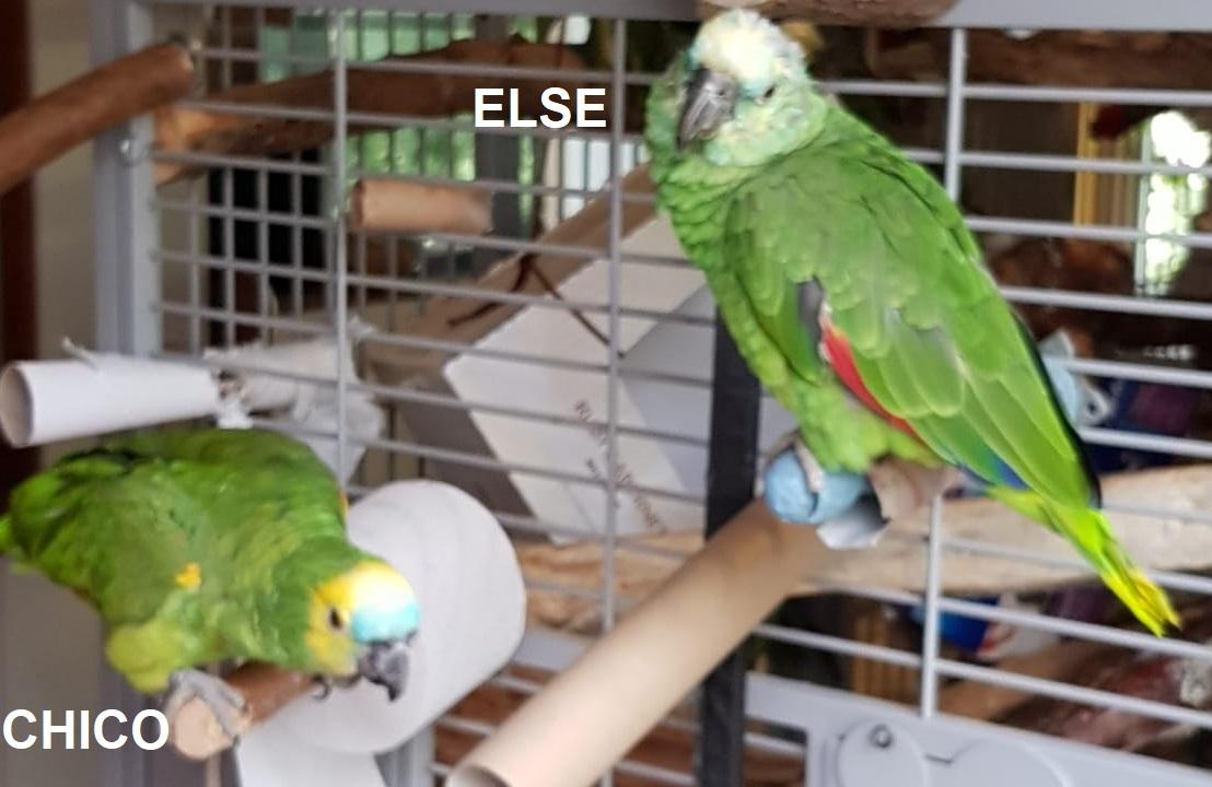 Chico und Else